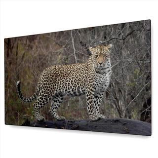 leopard panoramic canvas